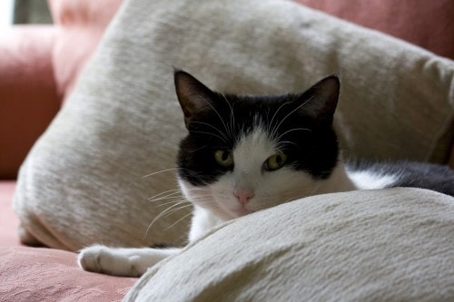 Signs of Illness in Cats - The Conscious Cat