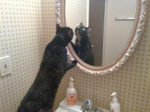 cat_looking_into_mirror