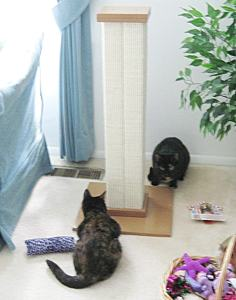 cats_with_scratching_post