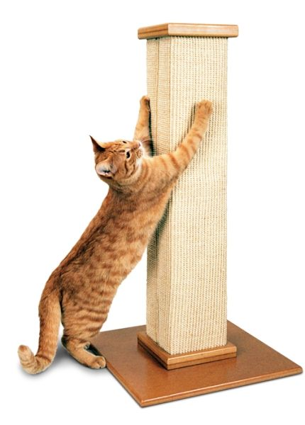 How To Pick The Right Scratching Post For Your Cat