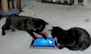 cats_with_iPad