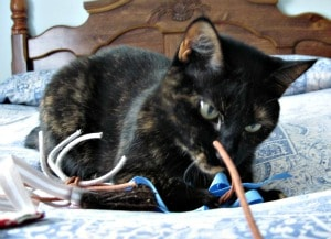 cat_wand_toy