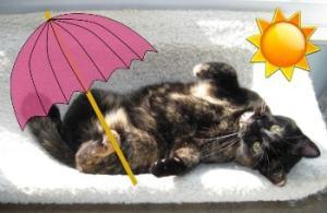 cat_summer_fun