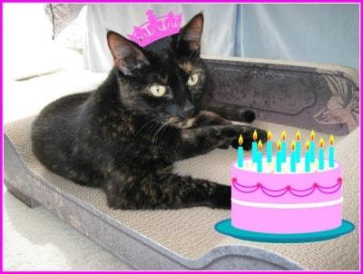 cat_with_birthday_cake