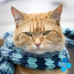 A_Street_Cat_Named-Bob
