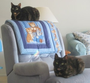 internet_cat_personalities