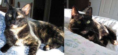 sleeping_arrangements_with_cats