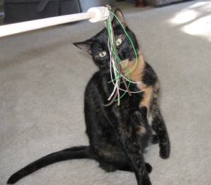 interactive_cat_toy