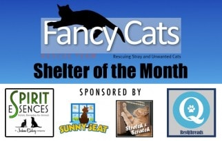 Jackson_Galaxy_shelter_of_the_month