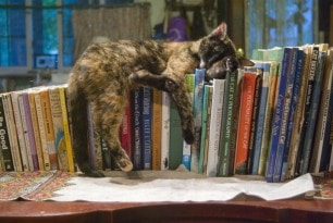 cat_with_books