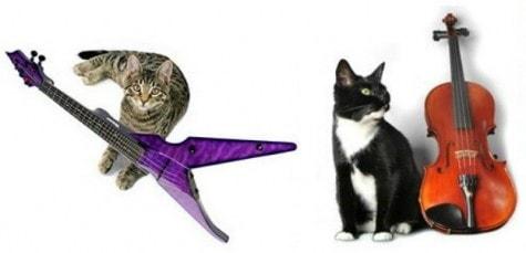 cats_violins