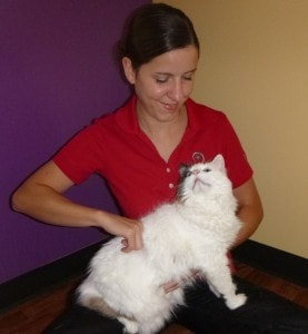 chiropractic_care_for_cats