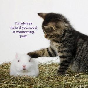 kitten_bunnnies