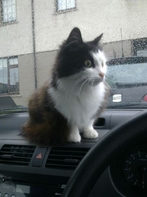 cats-road-trips