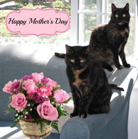 Mother's_Day_cats