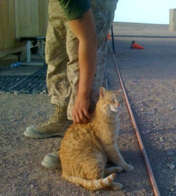 cats_and_soldiers