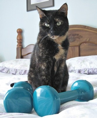 cat_exercise