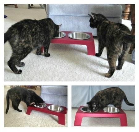 elevated_cat_bowl