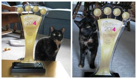 Pettie_Best_Cat_Blog