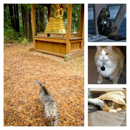 Shasta_Abbey_Cats