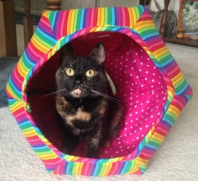 The_Cat_Ball