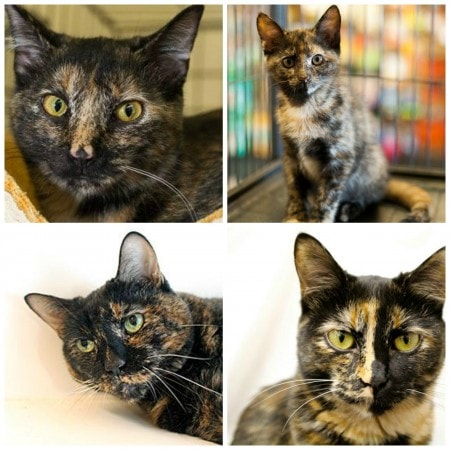 adopt_a_cat_month