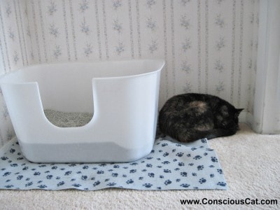 Why Do Cats Pee Over The Litter Box