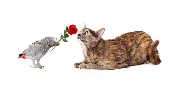 cat_and_bird