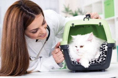 cat_with_vet