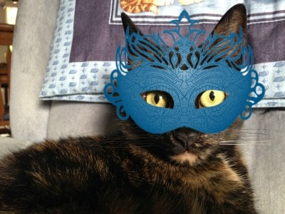 cat_with_mask