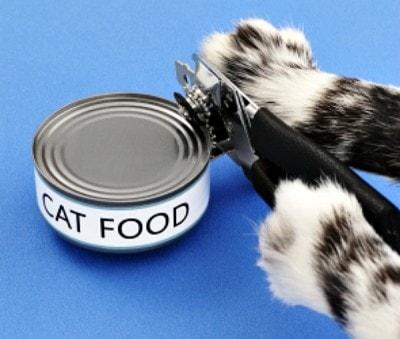 GMO_cat_food