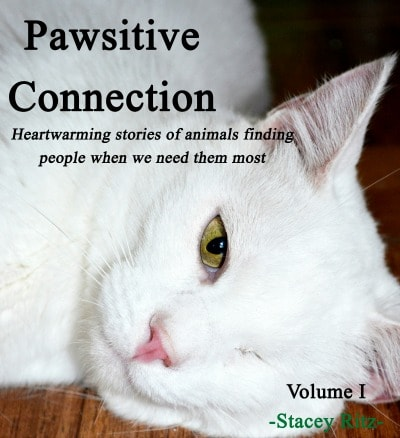 Pawsitive_Connections