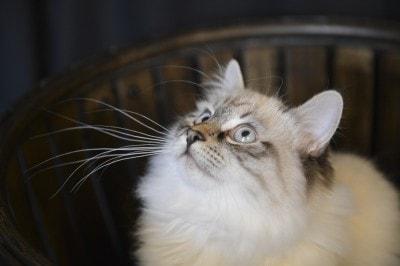 cat_portrait
