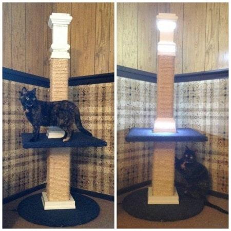 LED_cat_post