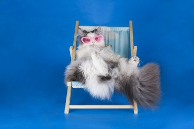cat_on_lounge_chair