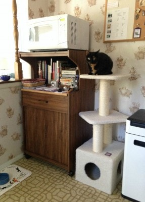 kitchen-catification