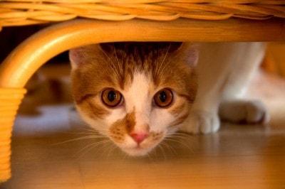 cat-under-bed