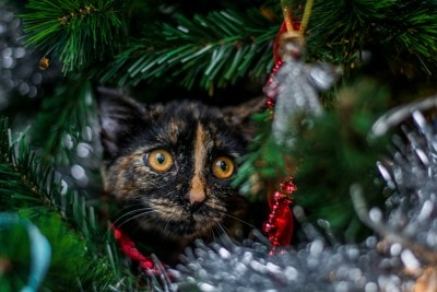 cat-christmas-tree