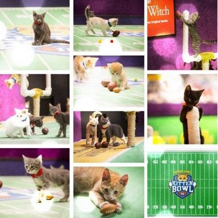 Kitten_Bowl