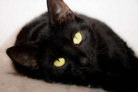 black-cat-superstitions