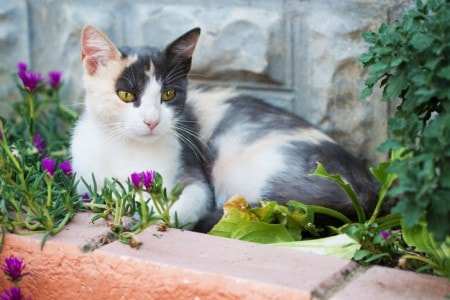 how to keep feral cats out of your yard