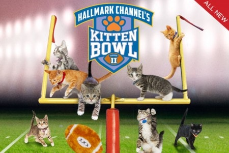 Kitten Bowl Returns to Hallmark Channel