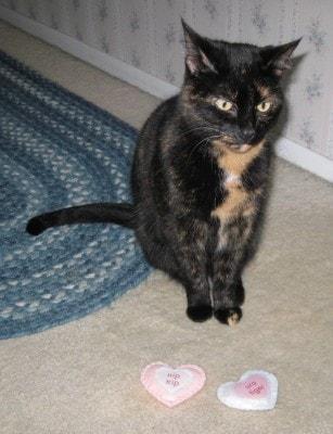 catnip-toys