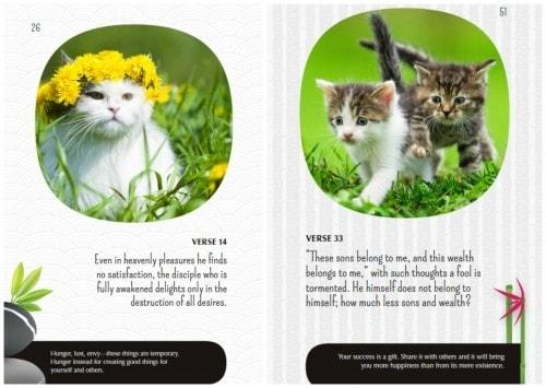 Zen-Cats