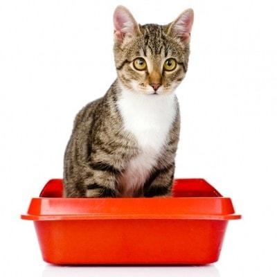 cat-litter-box