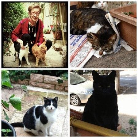 my-street-cats-raphaella-bilski