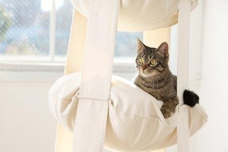 cats-trapeze