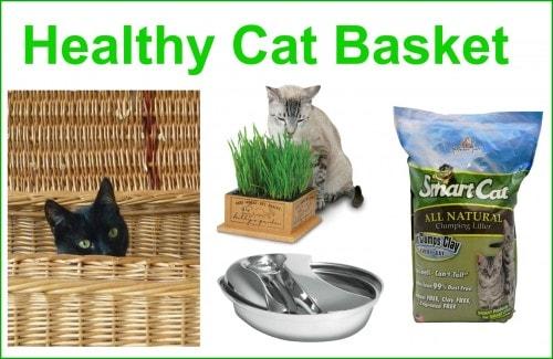 healthy-cat