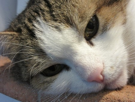 canine-flu-outbreak-cats