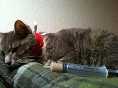 feeding-tube-cat